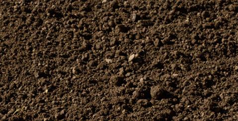 紀州の土壌image